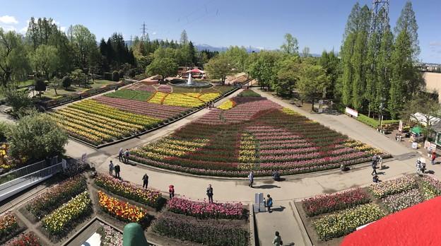 写真: チューリップタワーから眺望