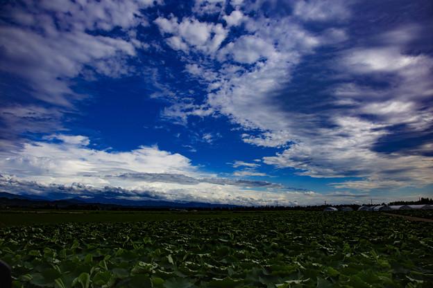 河北潟干拓地の雲 IMG_9933