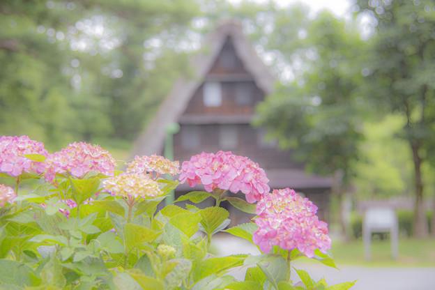 Photos: IMG_5749