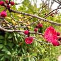 春、ほころぶ(2020,0127)