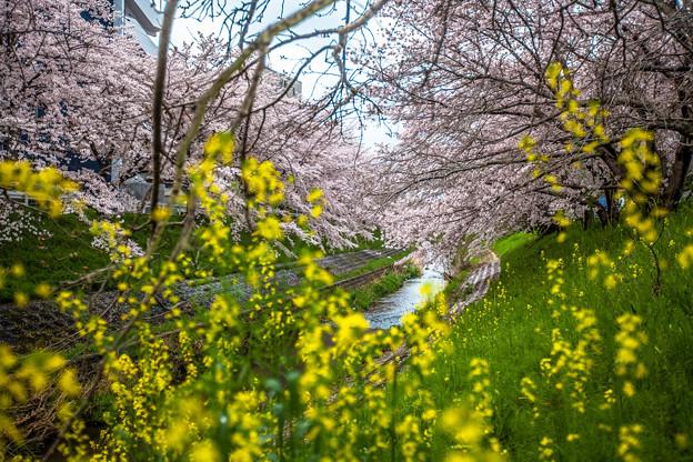 写真: 春暖花開