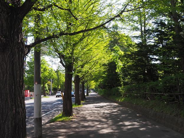 新緑の歩道