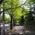 写真: 新緑の歩道