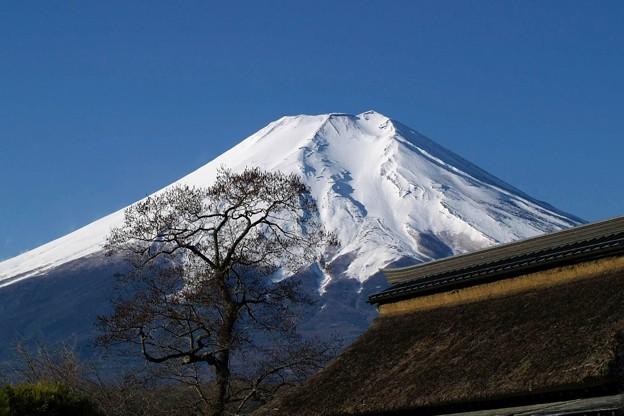 Photos: 富士と茅葺屋根