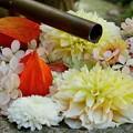 Photos: 水琴窟も花で飾られてました
