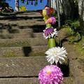 Photos: ダリアで飾られた参道