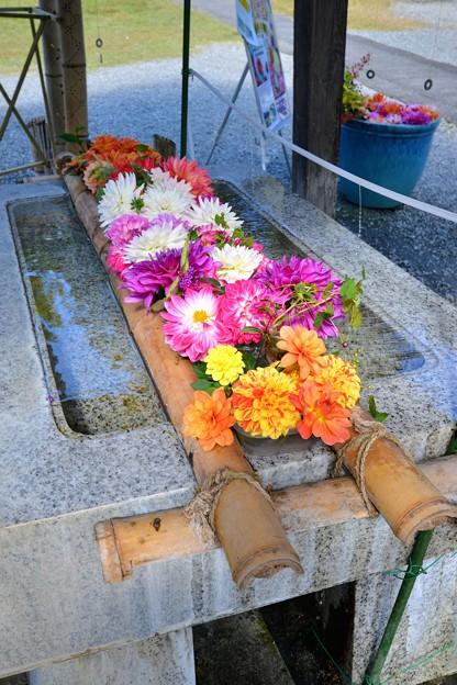 Photos: 小鹿神社花手水