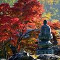 Photos: 札所一番・秋景色