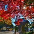 Photos: 鑁阿寺・山門(秋)