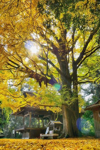 玉敷神社の秋