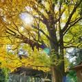 Photos: 玉敷神社の秋