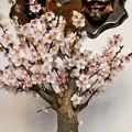 Photos: 我が家の春