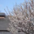 Photos: 浅き春