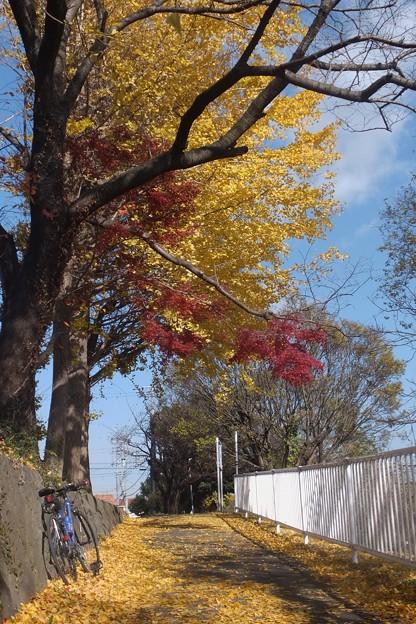 Photos: いてふ&もみぢ