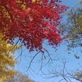 Photos: 赤黄青緑