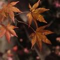Photos: もみぢ