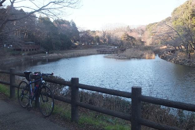 しらかしの池