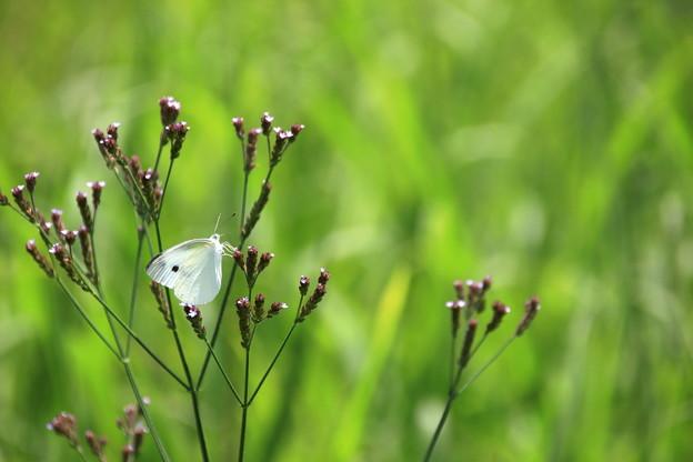 ☆草原のかがやき