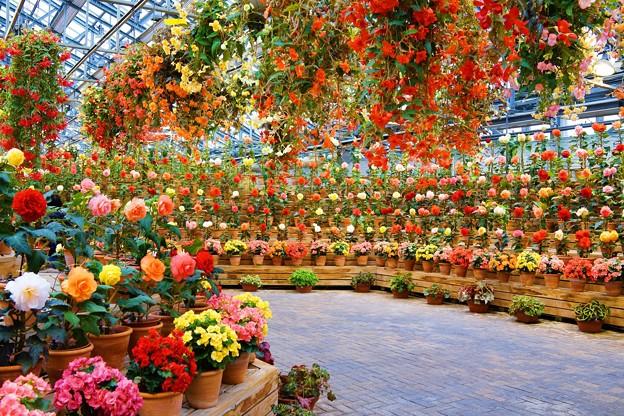 花々~なばなの里