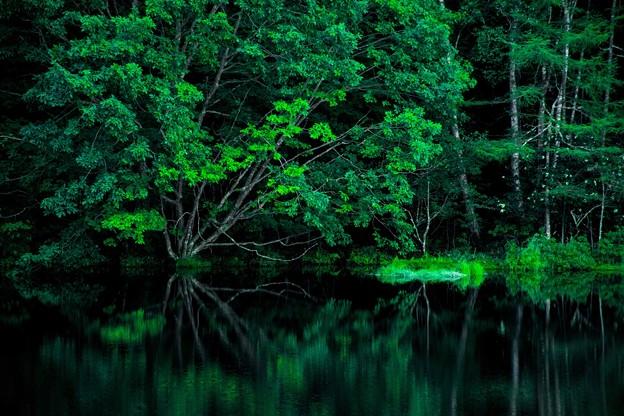 写真: 深緑