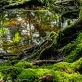 写真: 苔の惑星