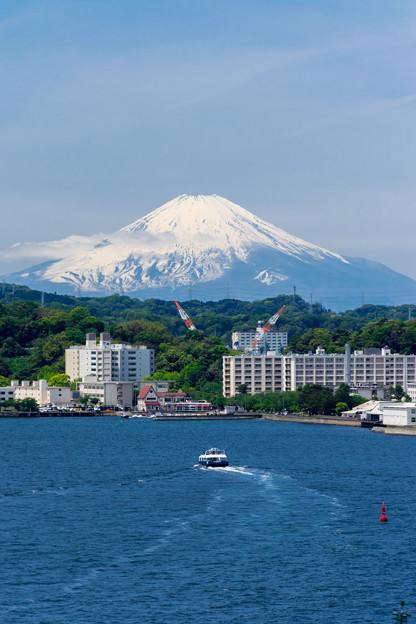 富士へ臨む
