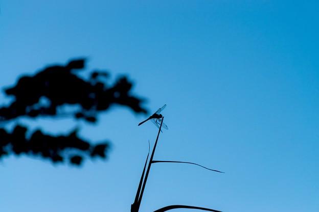 Photos: 青空に臨む影