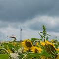 Photos: 太陽と風と