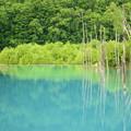 写真: 夏日青池
