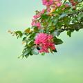 写真: 花與蜂