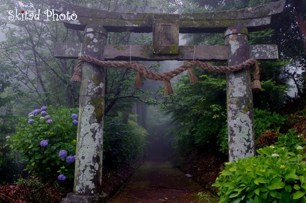 霧中の紫陽花
