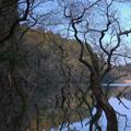Photos: 午後の池