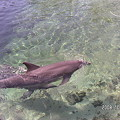 Photos: Dolphin Quest