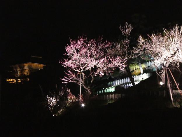 南崖 ライトアップ