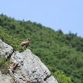 Photos: 崖の上の・・・