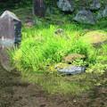 泉水湧水2