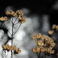 写真: 冬の光1