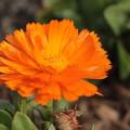 写真: オレンジ~!