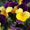 写真: 春の色1