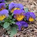 写真: 春の色2