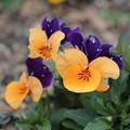 写真: 春の色3