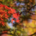 Photos: 錦秋9