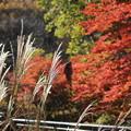 写真: 秋の競演