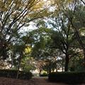 写真: 小さな公園で