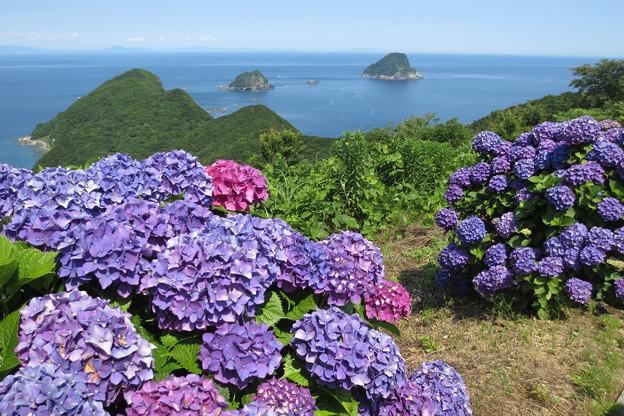 海辺の紫陽花2