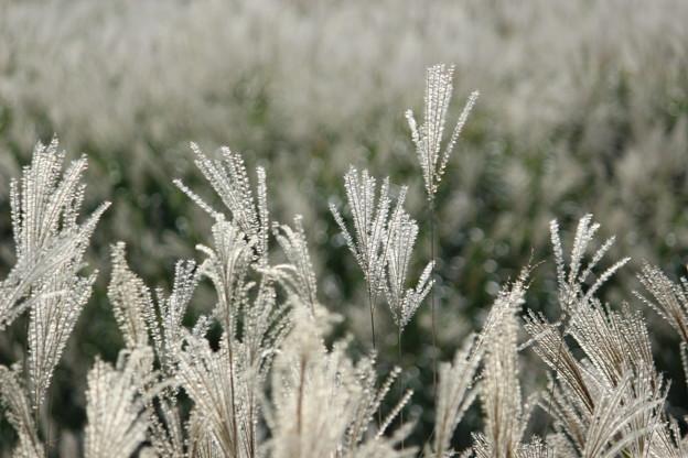 白銀色の風2