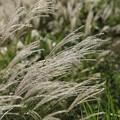 白銀色の風4