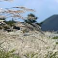 Photos: 白銀色の風5