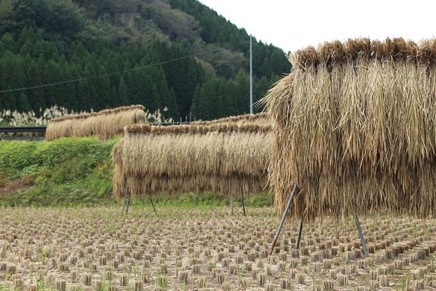 農村の秋1