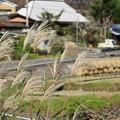 農村の秋2
